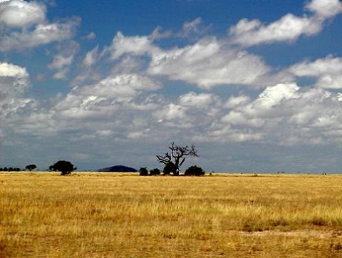 Resultado de imagen de Sabana en Kenia.