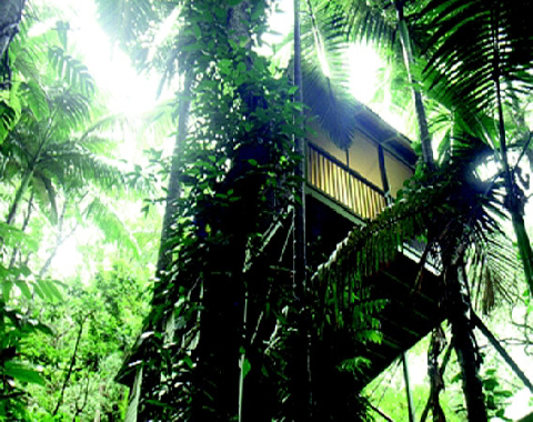 Daintree eco lodge spa for Estanque ecologico