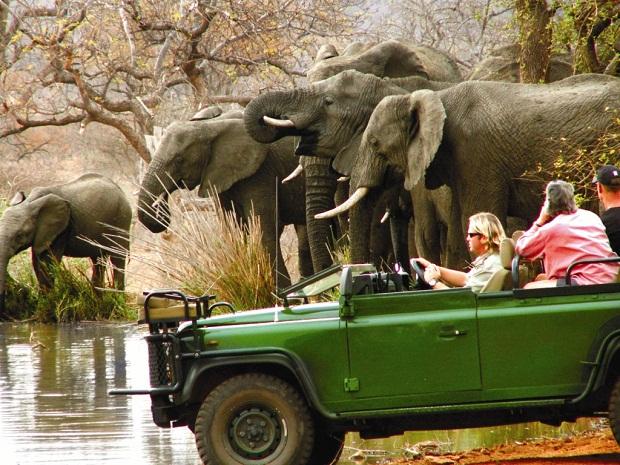 Consejos: qué llevar a un safari