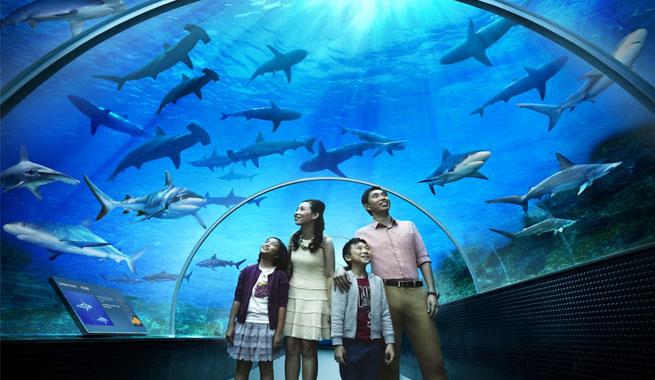 El acuario m s grande del mundo - La residence exotique fish house singapour ...