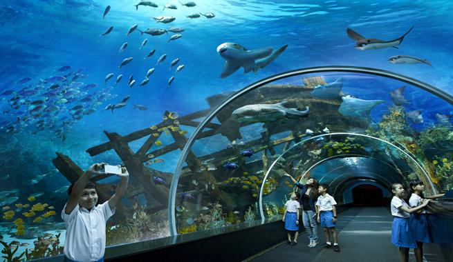 El acuario m s grande del mundo for Aquarium poema del mar