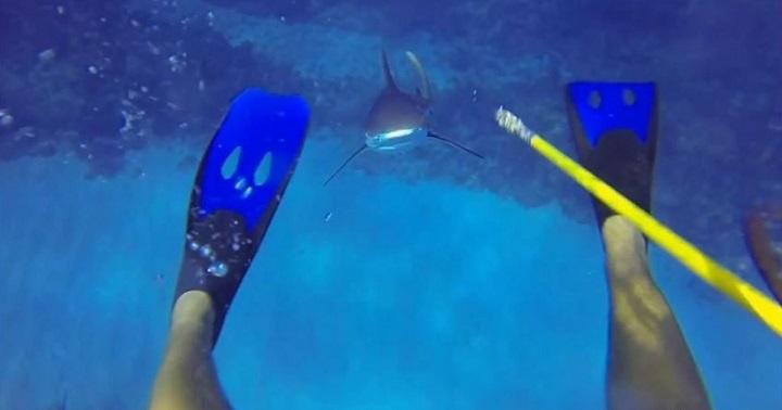 ataque de un tiburon