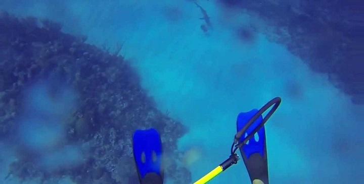 ataque de un tiburon1