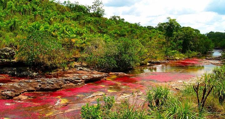 Rio Cano Cristales