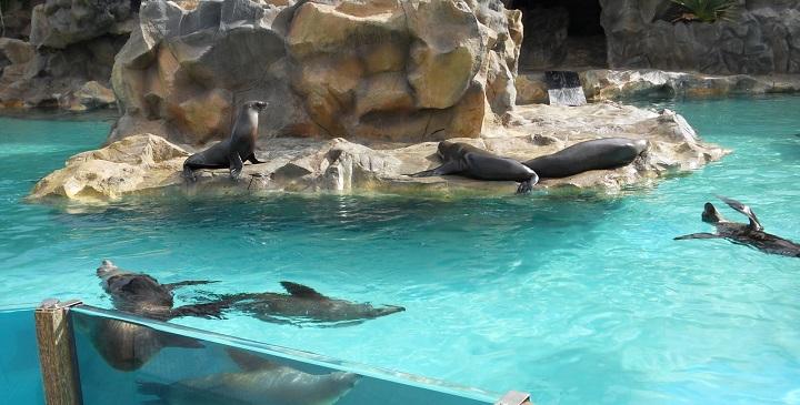 Parque acuatico Siam Park2