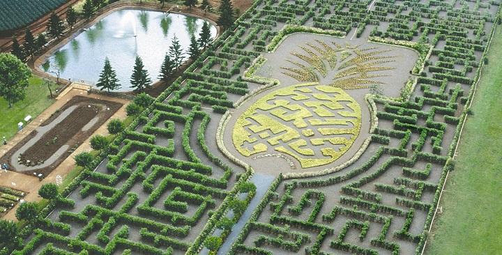 Plantacion Dole