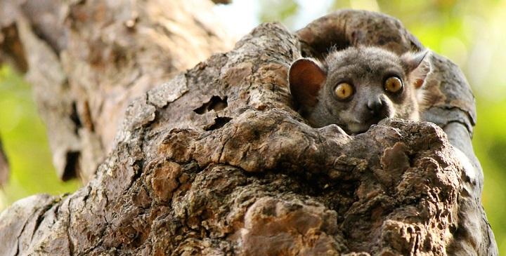 Parque Nacional Tsingy Madagascar4