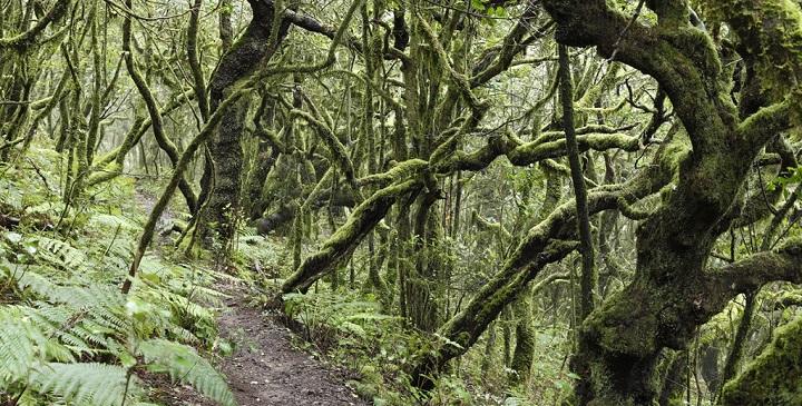 Parque Nacional Garajonay1