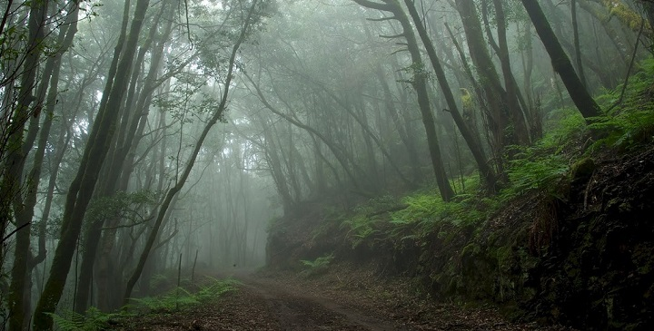 Parque Nacional Garajonay3