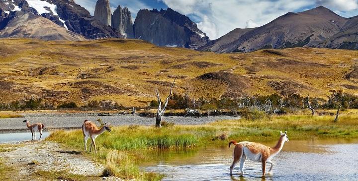Parque Nacional Torres del Paine2