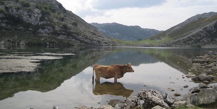 Lagos de Covadonga Asturias2