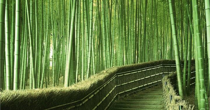 Bosque bambu Kyoto