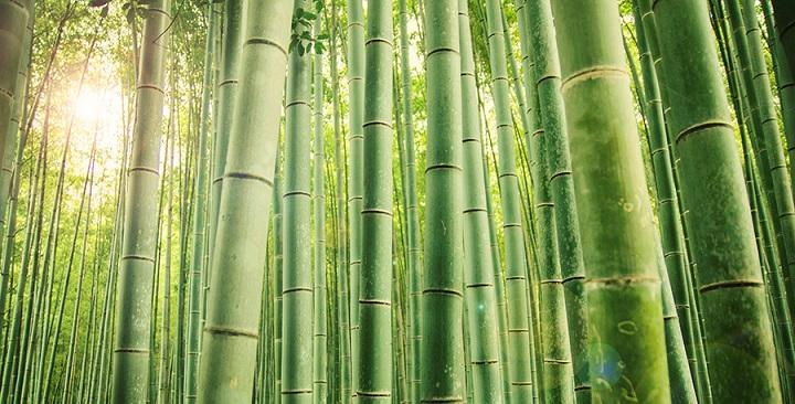 Bosque bambu Kyoto2
