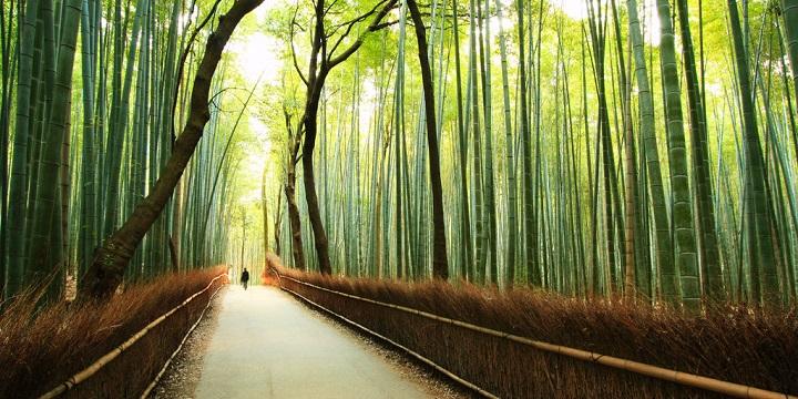 Bosque bambu Kyoto3