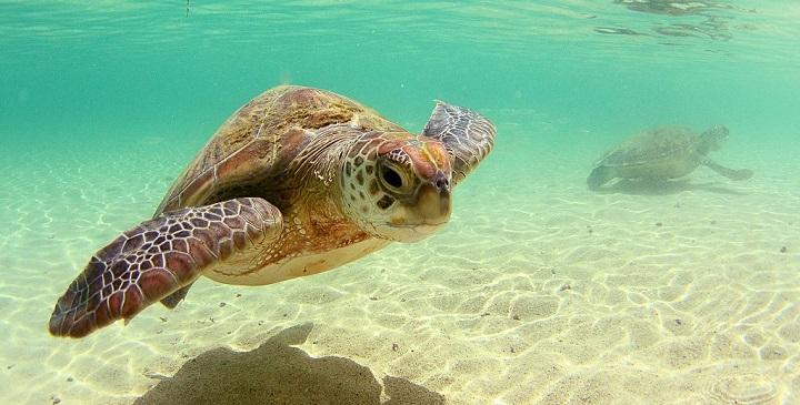 Isla de Lord Howe Australia2