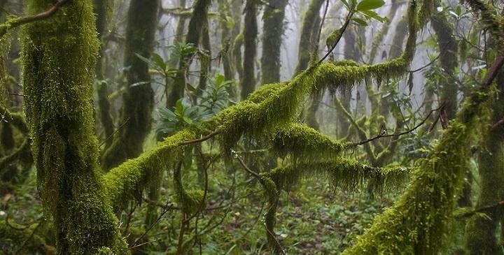 Parque Natural de los Alcornocales Cadiz1