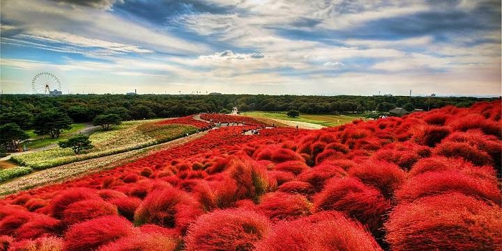 Parque Hitachi Japon1