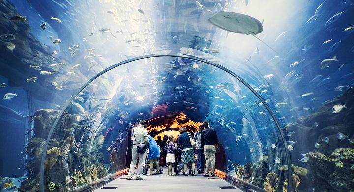 Dubai Aquarium1