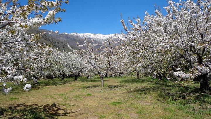 Valle del Jerte Extremadura