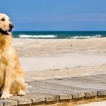 Las mejores playas para ir con perros