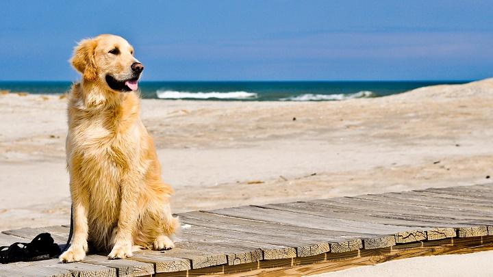 perro beach