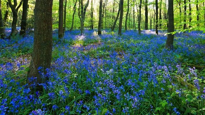 Bosque de Dean Inglaterra1