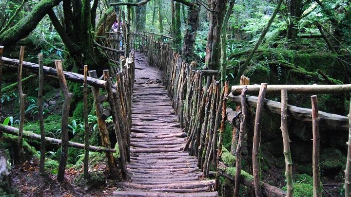 Bosque de Dean Inglaterra2