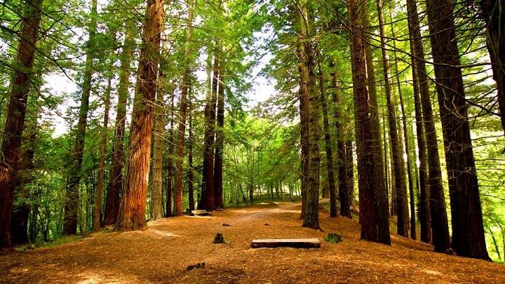 Monumento Natural de las Sequoias del Monte Cabezon Cantabria