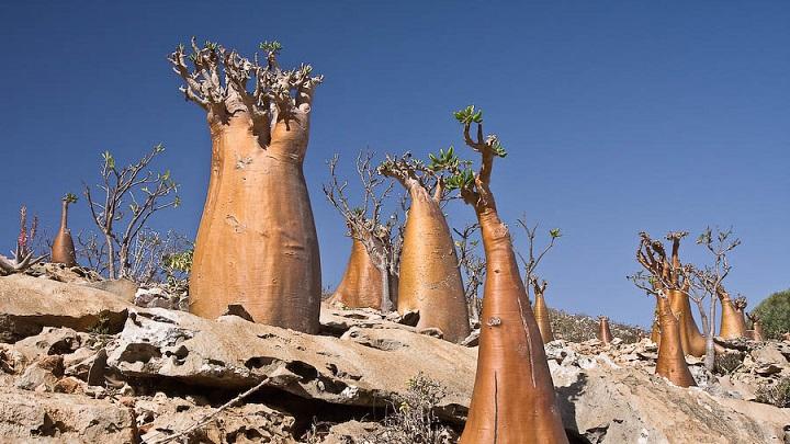 Socotra Yemen1