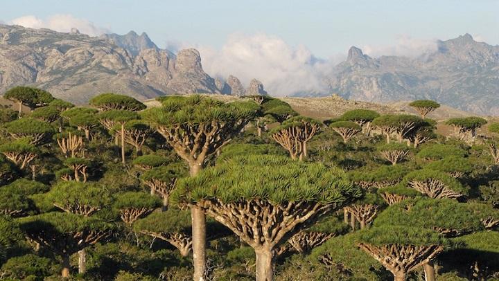 Socotra Yemen2