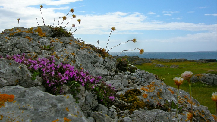 The Burren Irlanda2