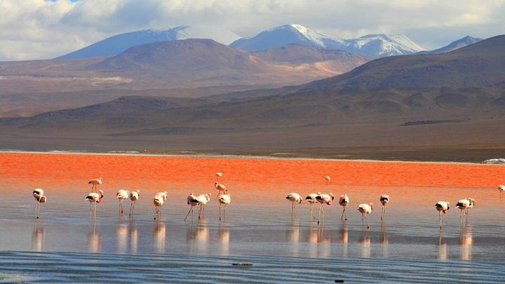 Laguna Colorada Bolivia3