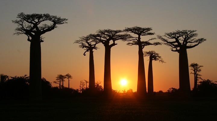 Valle de los Baobabs