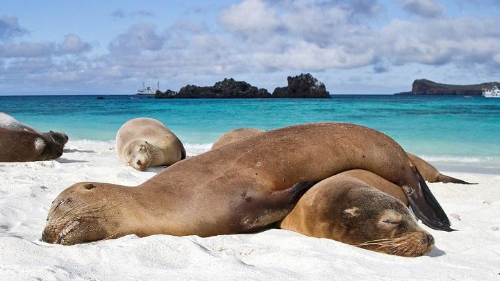 Islas Galapagos1