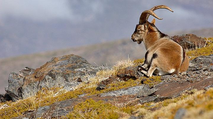 Parque Nacional de Sierra Nevada Andalucia3