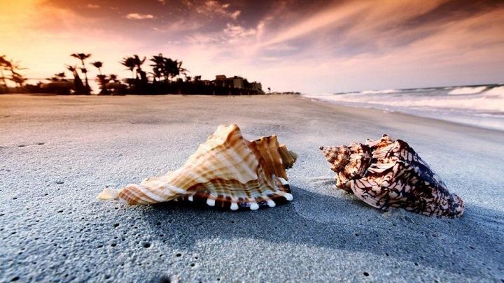 Shell-Beach