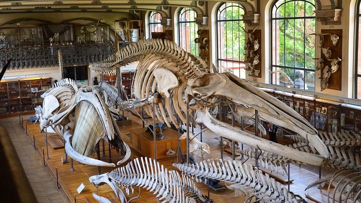 Museo-Nacional-de-Historia-Natural