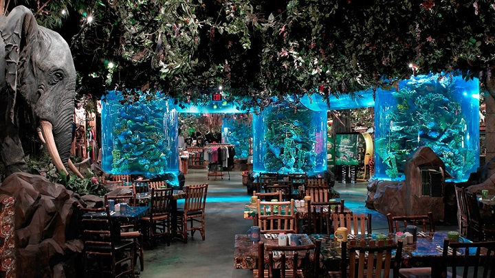 Rainforest-Cafe