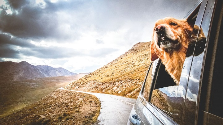 viajar-mascotas