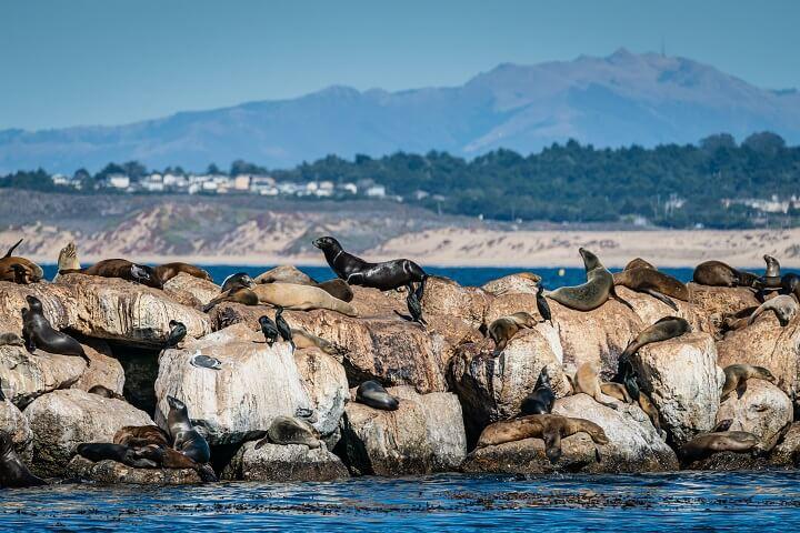 Monterey-USA