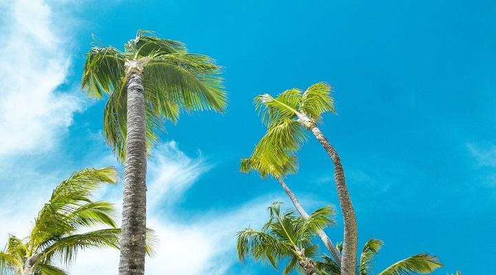 palmeras-playa